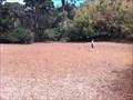 Image for Mountain Lake Park Dog Play Area - San Francisco, CA