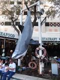 Image for Briny's Shark  -  Ft. Lauderdale, FL