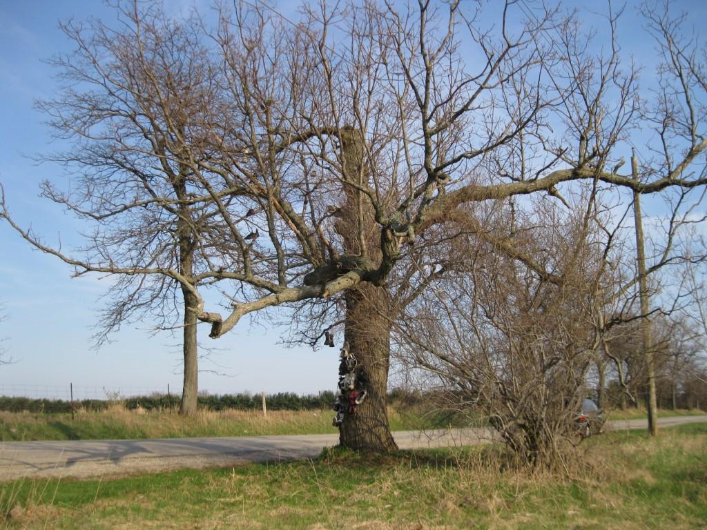 Category Shoe Treeswaymark Paris Ontario Tree