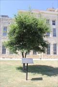 Image for Stephen F. Austin -- Hondo TX
