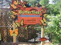 Image for Butterfly House - Dallas Texas