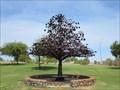 Image for The Tree at the Narrows, Rio Saludo Park - Tempe, Arizona