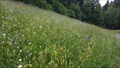 Image for Flower Field Griesweg - Tenniken, BL, Switzerland