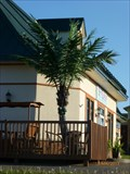 Image for Electric Palm Tree, Bromont, Qc