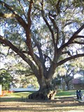 Image for The Elf Tree - Safety Harbor, FL