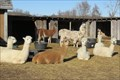 Image for KeLe Alpaca Farm – rural Kewaunee, WI