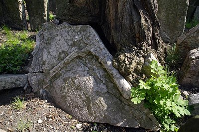 Árbol que come una lápida. Tree eating a headstone. Image Gallery