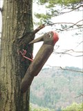 Image for Woodpecker in the Palatinate Forest - RLP / Germany