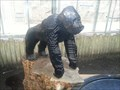 Image for LEGO Sculpture Gorilla - ZOO Duisburg (Germany)