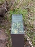 Image for Box Elder - Springdale, UT