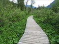 Image for Skunk Cabbage Boardwalk - Revelstoke, British Columbia