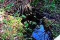 Image for Hylebos Wetlands Sinkhole - Federal Way, Washington