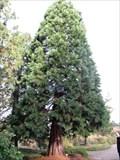 Image for Botanischer Garten Hamburg, Germany