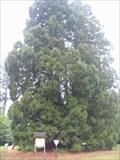Image for Naturdenkmal 'Mammutbäume' near Landstuhl, Pfalz, Germany