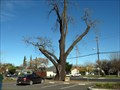 Image for Uncle Burts Tree, Vacaville, CA