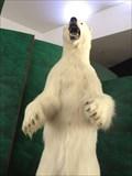 Image for Polar Bear - Laurel, MD