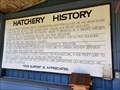 Image for Washington's First Slamon Hatchery