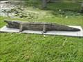 Image for Alligator - Ormond Beach, FL