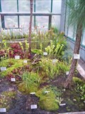 Image for Carnivorous plants in Botanic Gardens Liberec, Czech Republic