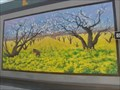 Image for Apricot Orchard with Flowering Wild Mustard - Hollister, California