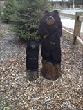 Image for Black Bears - Holland, Michigan