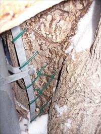 Arbre côté gauche le bout de métal et les mailles vertes de la clôture disparaissent dans l