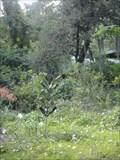 Image for Squartter's Garden Bottle Tree
