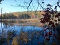 Image for Emmons Pond Bog - Davenport, NY