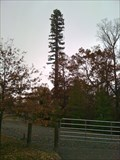 Image for Disguised Cell Tower - Fairfax, VA
