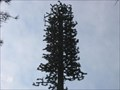 Image for McLean Road Tree