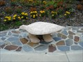 Image for Turtle Bench - Gainesville, FL