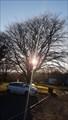 Image for King George VI Coronation tree - Sourton, Devon