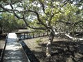 Image for Mangrove Boardwalk - Huskisson, NSW