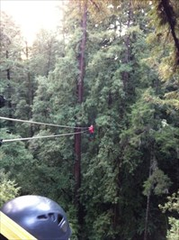 440 Foot Ride Into The Trees, Mt. Hermon, CA