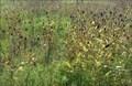Image for Scissortail Park Flower Field - Oklahoma City, OK