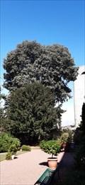 Image for Micocoulier du jardin botanique Prefecture - Niort, France