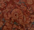 Image for Amonite fossils - Sant Ignazio Cathedral - Roma - Italy