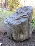 Image for Petrified Wood - Eugene, Oregon