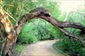 Image for McAllen Nature Center, McAllen, Texas