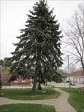 Image for World War II Memorial Tree - Kennebunk, Maine