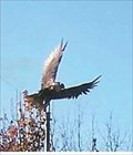 Image for Eagle over Grants Site - Florida, MO
