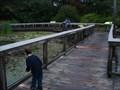 Image for Swamp Walk - Mystic, CT