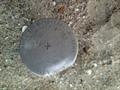Image for USACOE Survey Disk - 3rd & Boardwalk, Ocean City, NJ