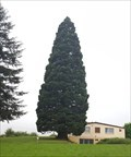 Image for Sequoiadendron Giganteum at a Farm - Möhlin, AG, Switzerland