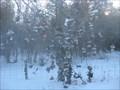 "Image for ""THINK PINK..."" Shoe Tree - Hwy 23 near Beaverton, Ontario"