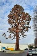 Image for Mammutbaum auf dem Lidl-Parkplatz - Brühl, NRW, Germany