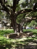 Image for Famous Hanging Tree - Goliad, TX