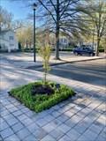 Image for Cathy Bach-McElroy dedicated tree - Ashland, Virginia