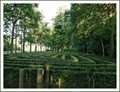 Image for Maze Kasteel van Loppem- W-Vl- Belgium