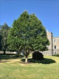 Image for Rev. Thomas F. Conboy, Jr. dedicated tree - Cumberland, Rhode Island